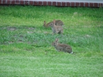 These little fellows were in our back yard last year